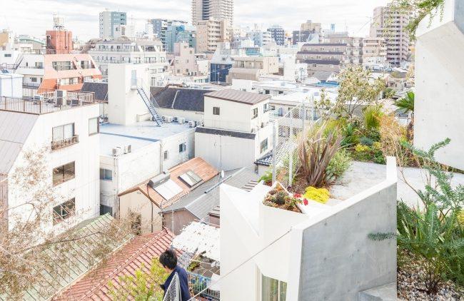 террасы-крыши